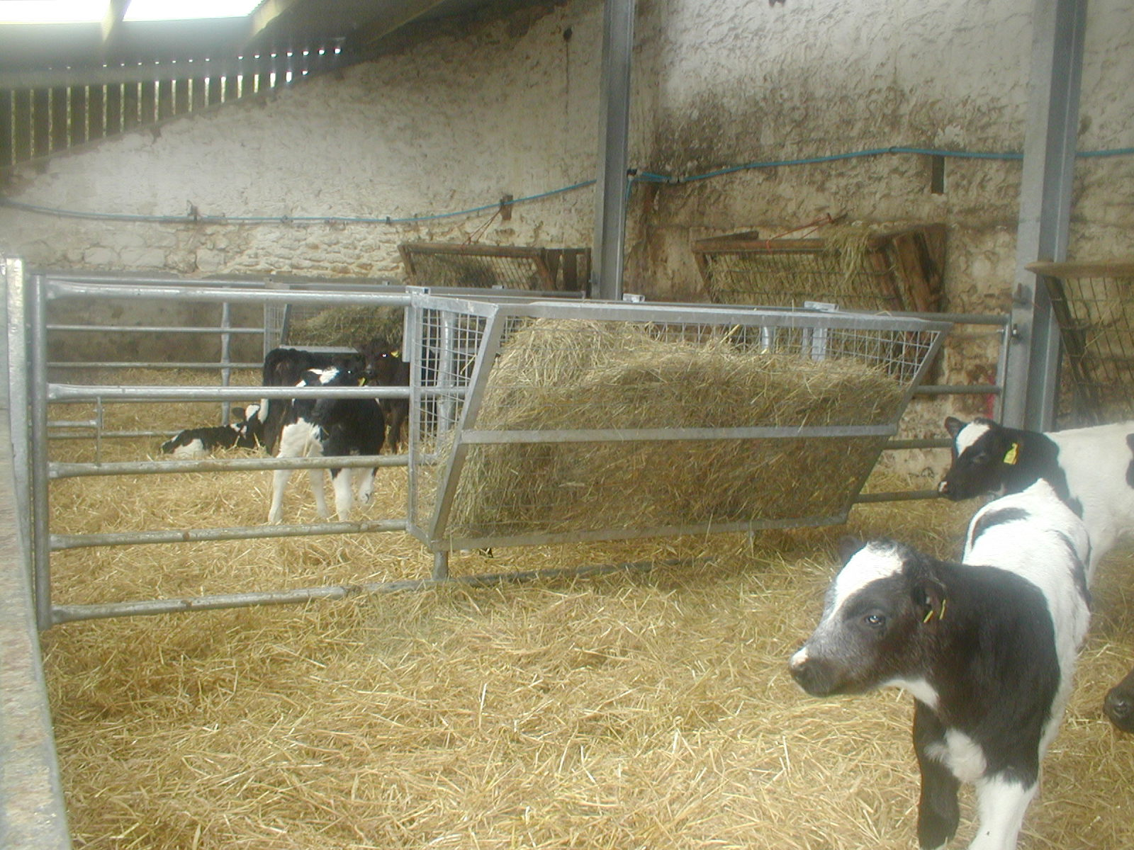 hay round to how bale a feeder cattle watch livestock of youtube panels protect fence with